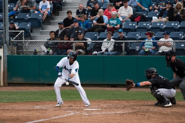 Everett AquaSox Spotlight: 3rd Base Nick Zammarelli
